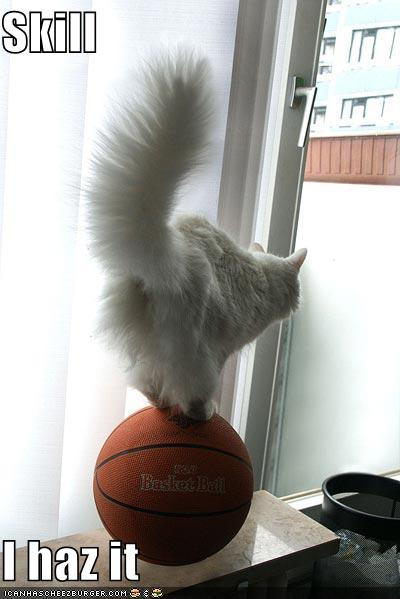 basketball pictures funny. Funny-pictures-cat-balances-